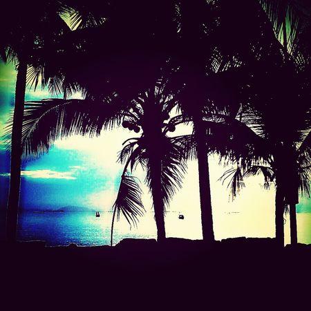 เงามะพร้าวกับแสงจากทะเล