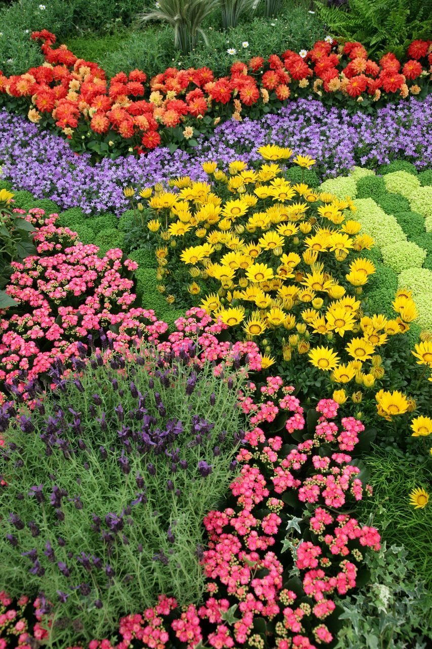 flower, beauty in nature, freshness, nature, growth, flowerbed, yellow, fragility, abundance, plant, multi colored, flower head, vibrant color, field, springtime, purple, petal, no people, day, blossom, blooming, outdoors, park - man made space, green color, tulip, pink color