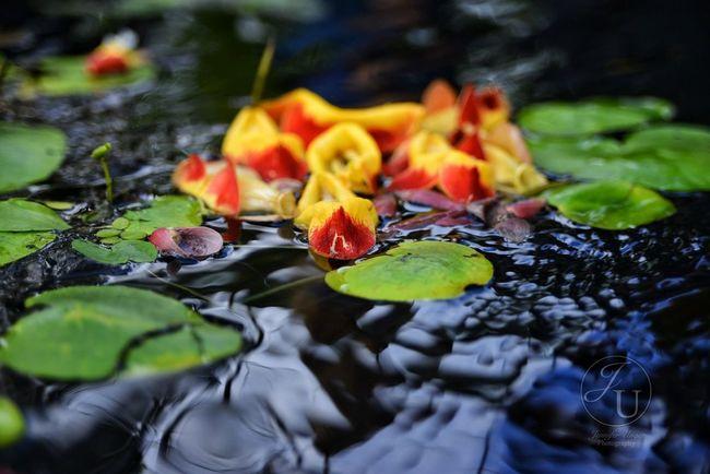 Water Nature Flower Nikon