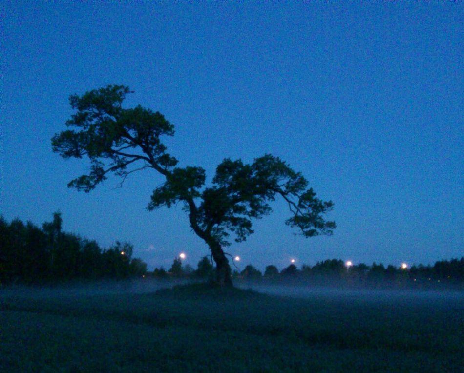 TreePorn My Beautiful Tree Tonight Is