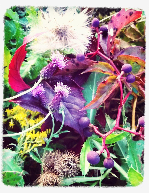 Delicious Autumn Prickly Pricks  Prick