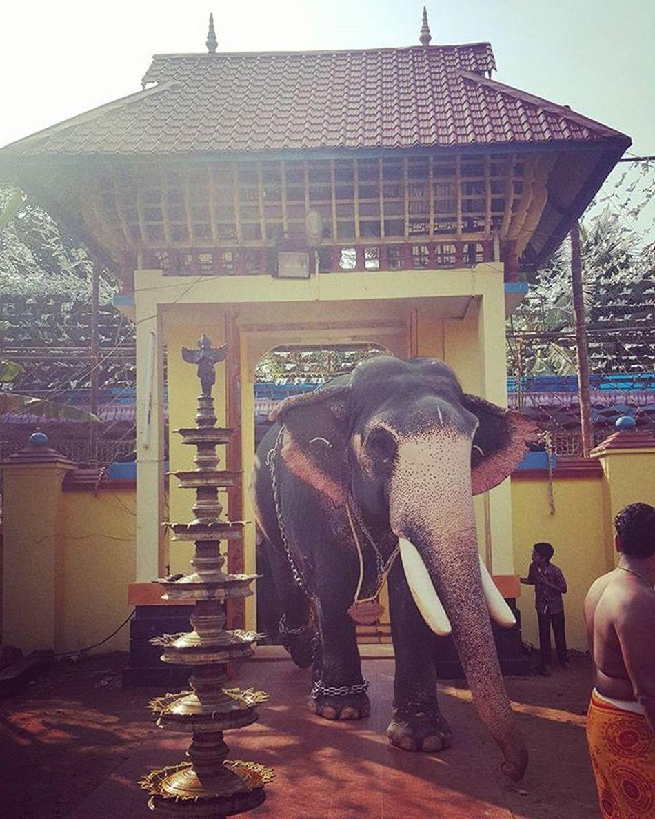 Elephant At Temple Animallover Mahavat Kottayam Keralatourism GodsOwnCountry Amaro Instafilter Picoftheday S6shot Instalike Instafollow TBT  Vacation Elephantlover Elephantsofinstagram Grandexperience Entrancegate Indiantemple Hathidaat