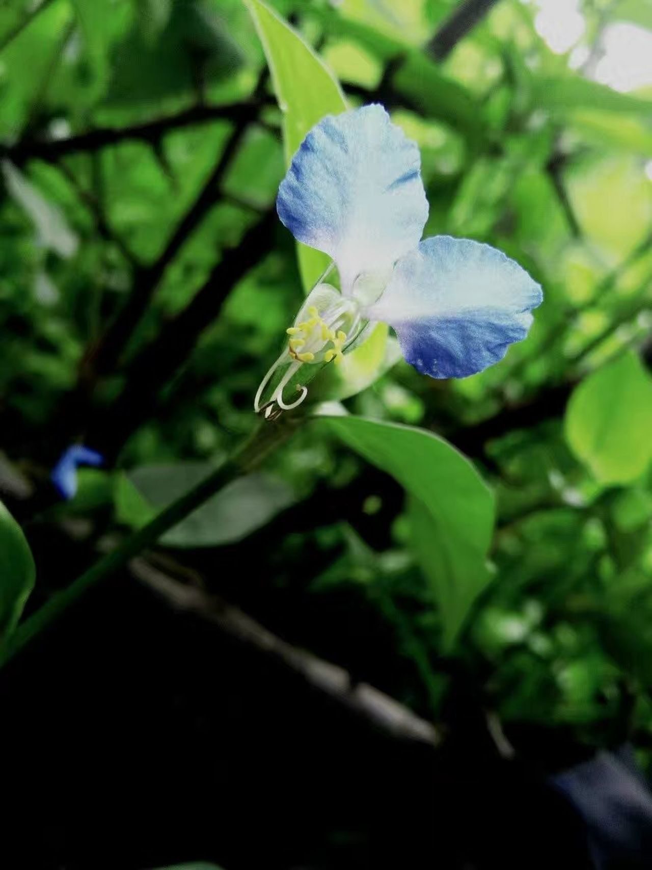路边的野花 Flower Nature Fragility Plant Beauty In Nature Growth Close-up Freshness Leaf Petal No People Day Outdoors Flower Head