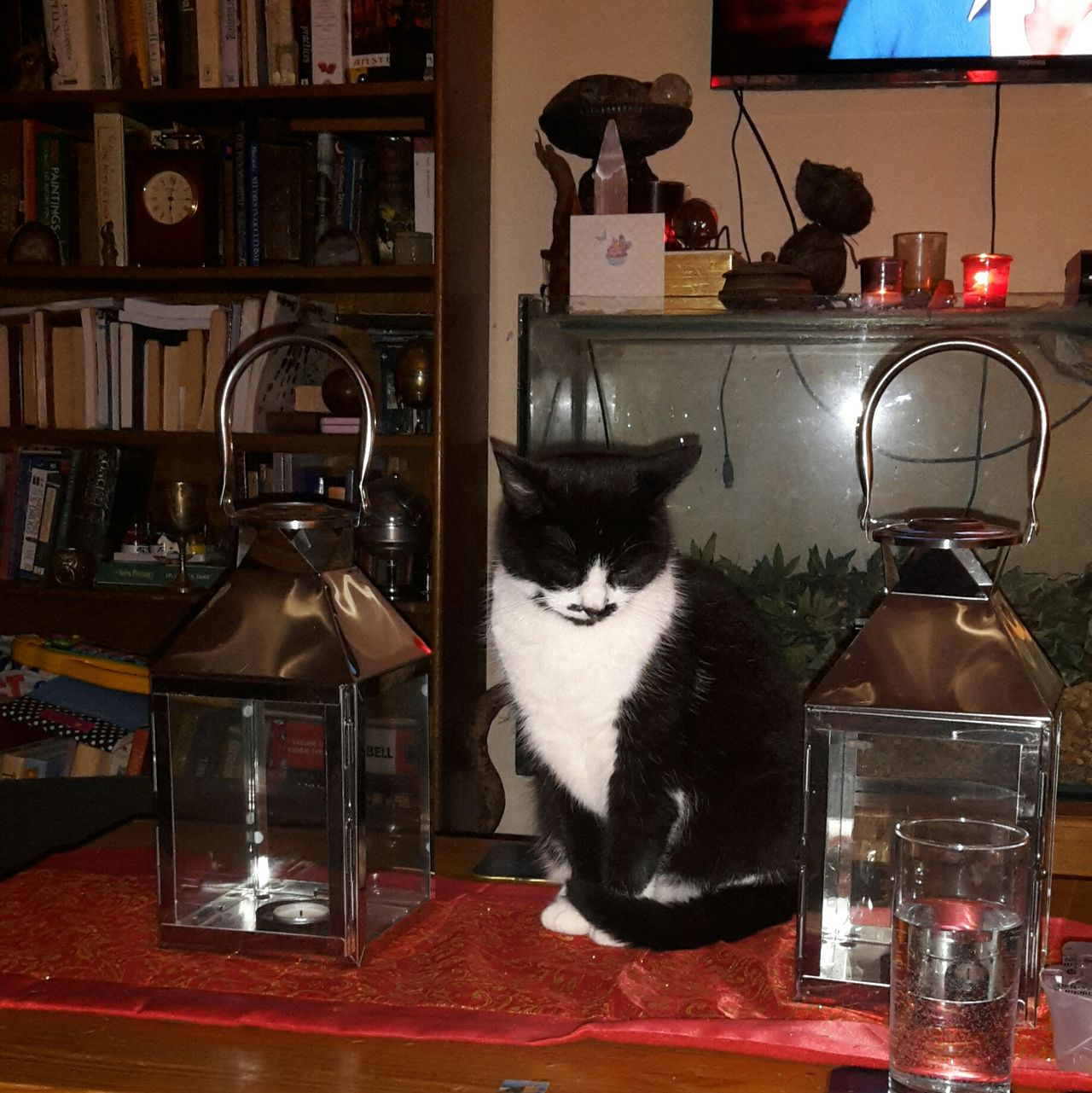 Cat Lanterns Table Pose Sleeping Cat Sitting Cat Indoors