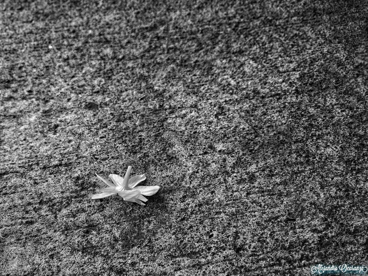 Belleza Solitaria Photographie  No People First Eyeem Photo Plant Black And White Photography Blake_and_white Street Flowers Flower City Nature Photo Guadalajara Mexico Photography Guadalajara Jalisco Photos Day Photographer Blsckandwhite B&w Blackandwhitephotography Black & White Close-up Illuminated