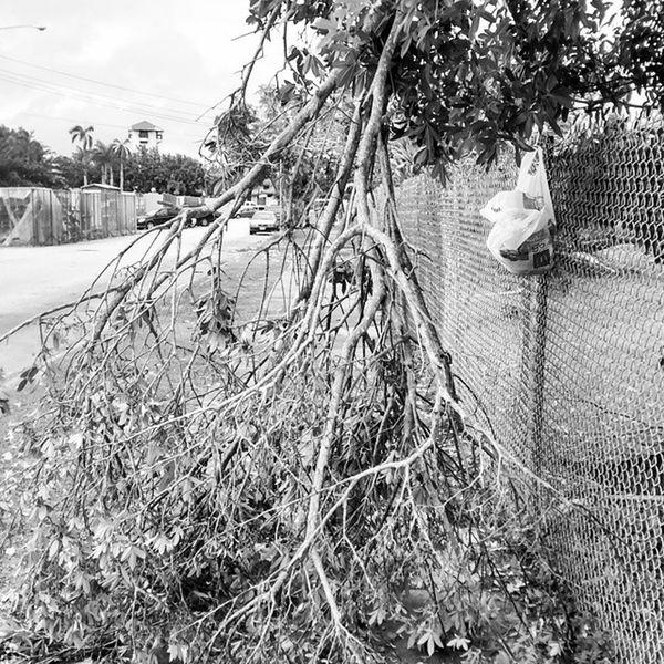 Lunch time debris Bavi Tropicaldepression