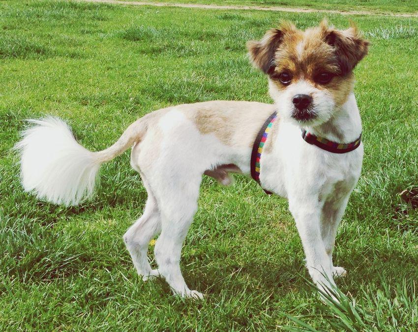 Stylish Dog Leo 🐶 Cute Pets