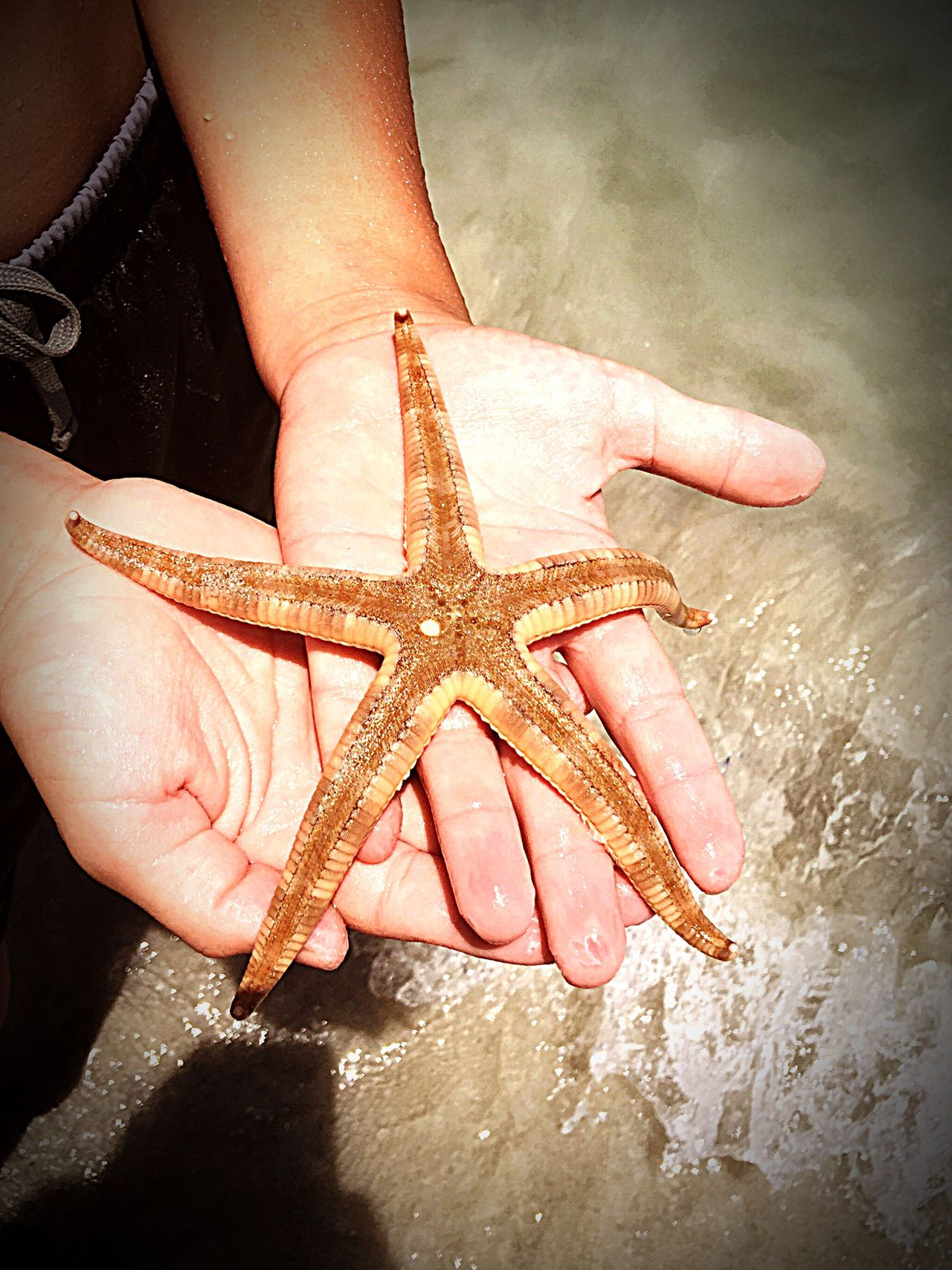 Starfish: Back to the Sea Clear Ocean Clear Water Starfish  Hands Holding Holding Starfish Beach Beach Photography Life Is A Beach Starfish At Beach Australia Marine Life Marine Life