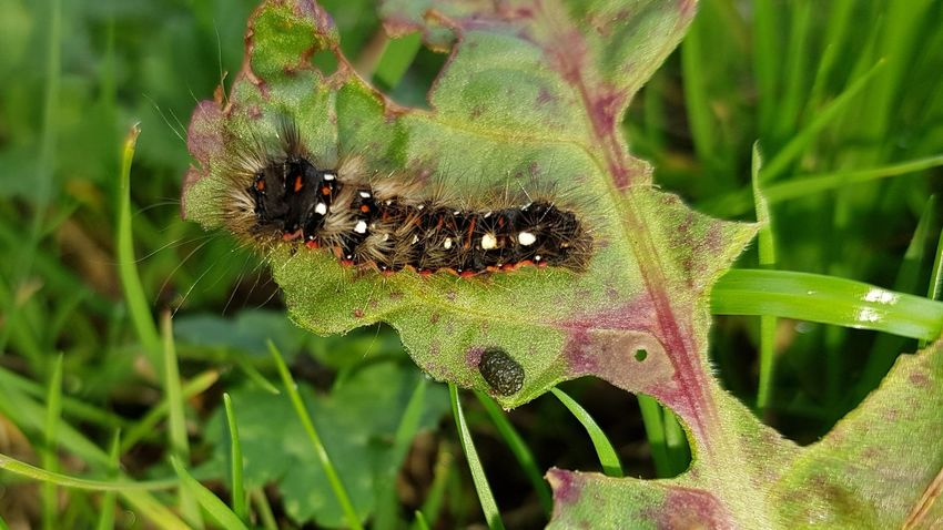 Caterpillar Caterpillar Photography Outdoors Beauty In Nature No People Day Leaf Plant Close-up Nature Insect