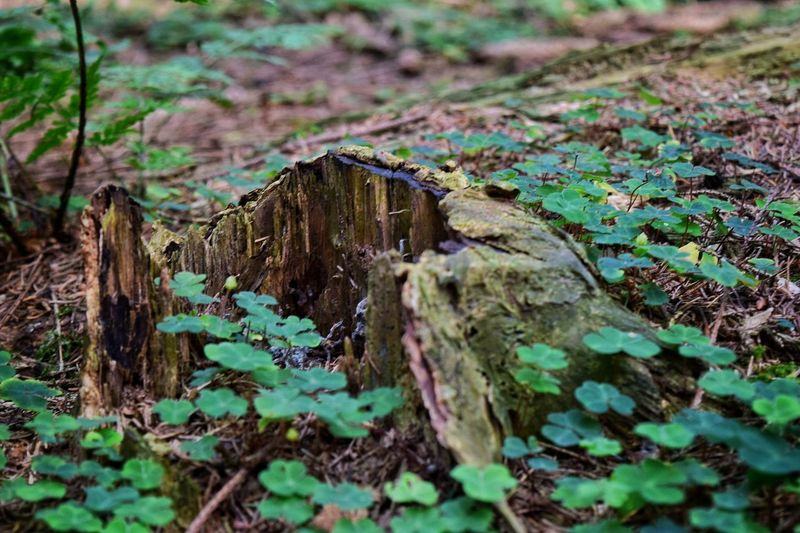 Plant Selective Focus Green Color Moss Growth Nature Day Weathered Non-urban Scene Green Outdoors Tranquility Stone Material Land Small Focus On Foreground Remote Scenics Overgrown Teutoburger Wald Teutoburg Forest Teutoburgerwald Germany Germany🇩🇪