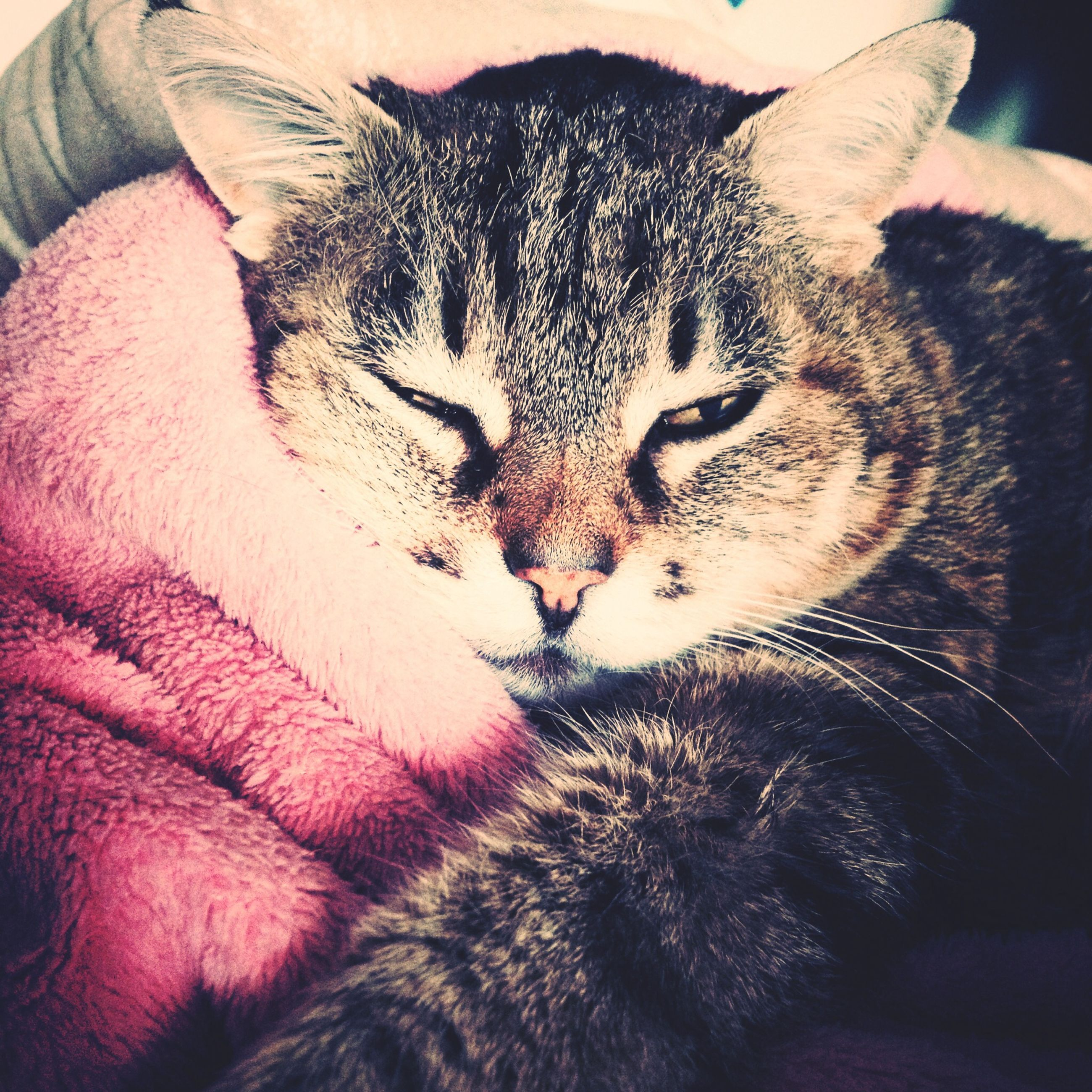 domestic animals, animal themes, mammal, pets, indoors, domestic cat, one animal, cat, feline, relaxation, sleeping, resting, lying down, close-up, whisker, eyes closed, bed, animal head, animal body part, home interior