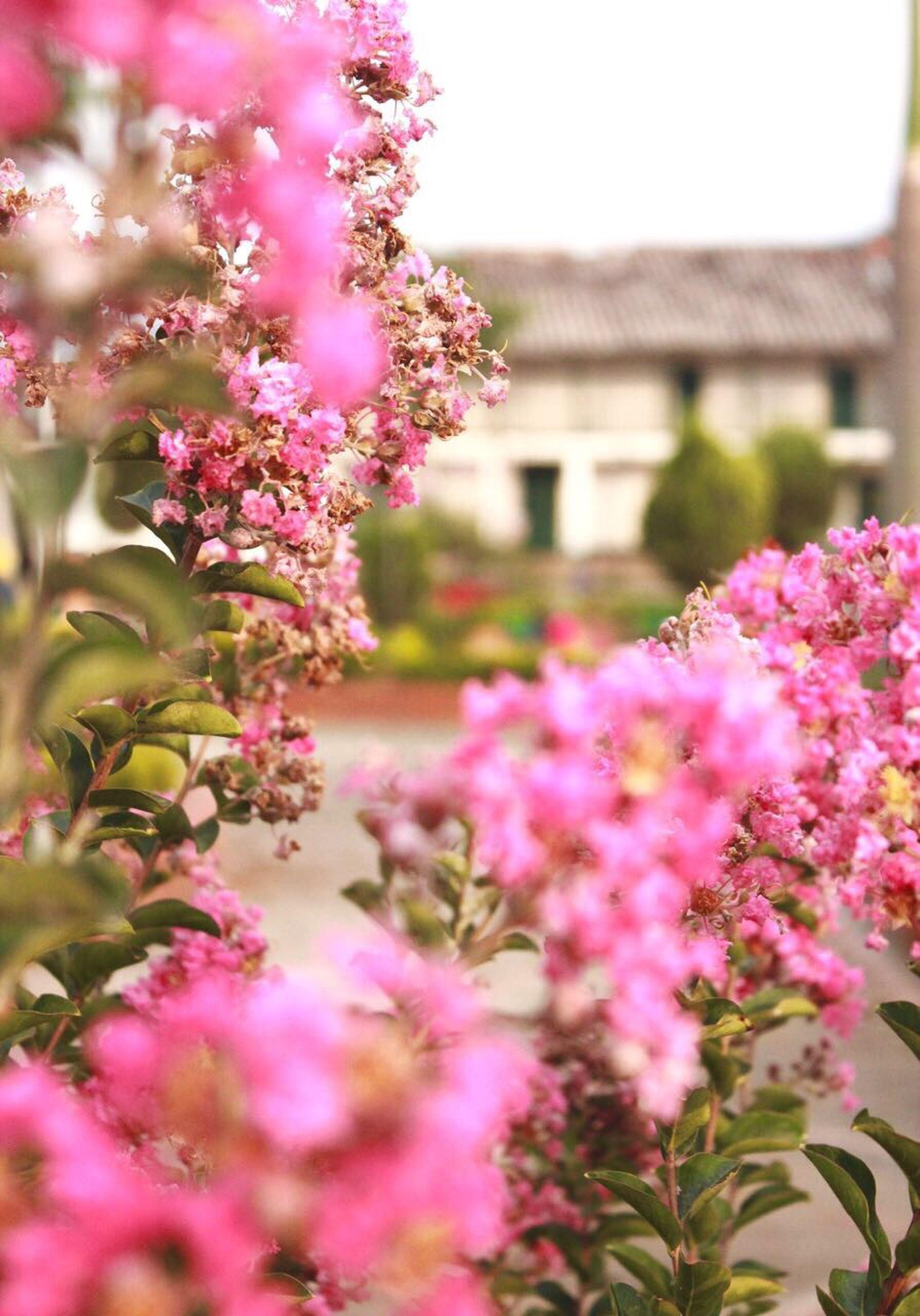 Stunning Place My Land Nature Sense Flower Strong Beauty Twothousandseventeen