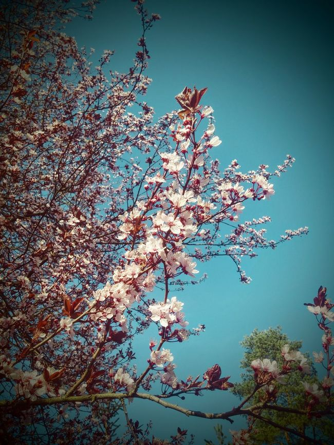 Urban Spring Fever Taking Photos Check This Out Nature Tree Outdoors