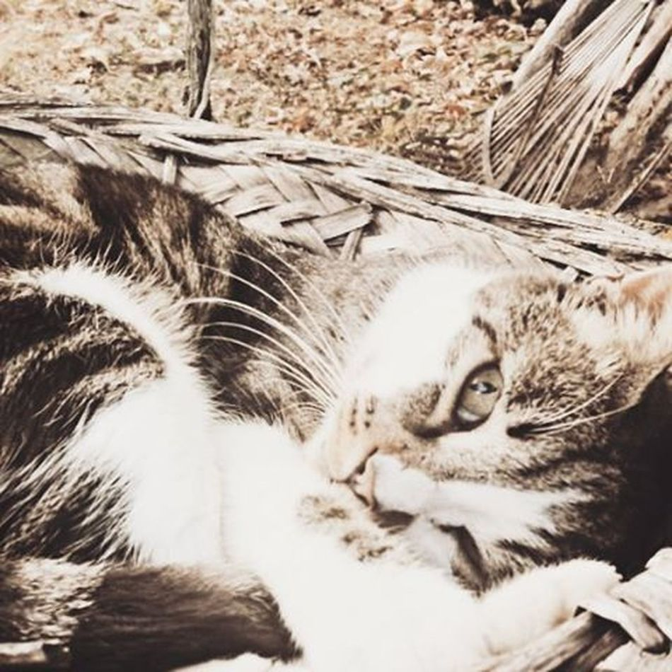 Mostrafe2015 Musetto Instacat Catsgram Catsarecool Picsart Photooftheday Nice Shoot Igersfe Myferrara Igers_emiliaromagna Miao Instaphoto Photocat Follow4follow Like4like Followme Love Photos