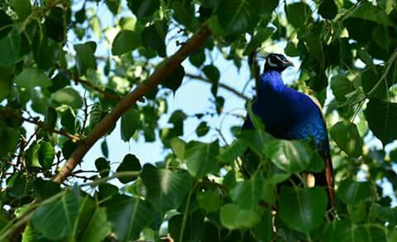 green color, bird, leaf, outdoors, blue, tree, nature, no people, low angle view, animal wildlife, day, animals in the wild, beauty in nature, animal themes