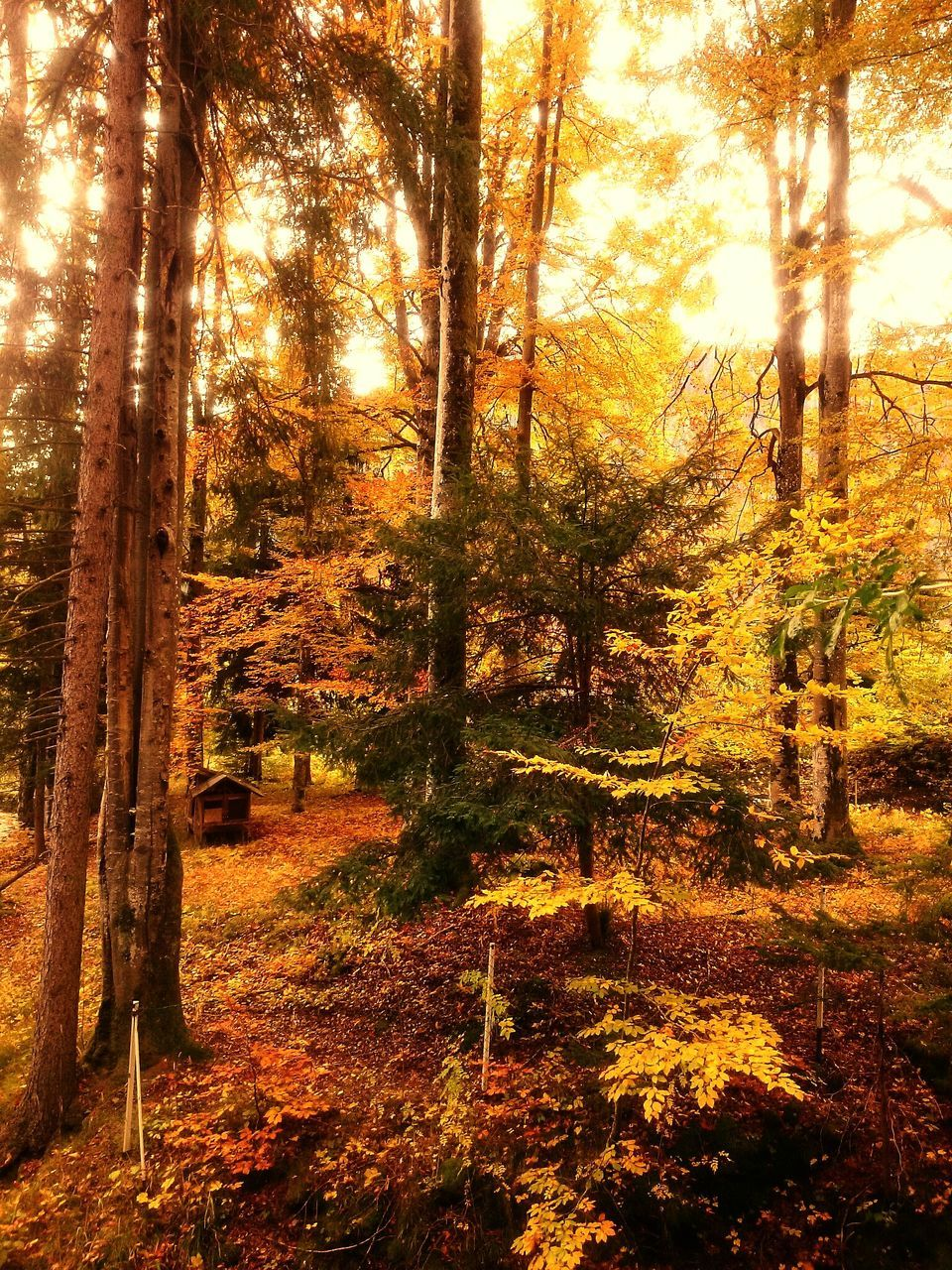 tree, nature, tranquility, autumn, tranquil scene, forest, beauty in nature, change, scenics, no people, tree trunk, outdoors, landscape, day, growth, woodland, sunlight, travel destinations, sky