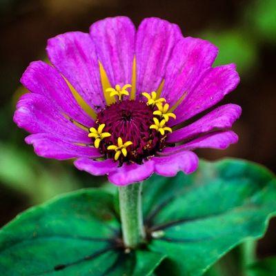 Florecitas_mx Floral_perfection Floweroftheday Florecitasweekly Flowersturk Florebundus_macro Flowerstyles_gf Flowerstalking Flowerporn Flower_pinks Flowersofinstagram Floralfix