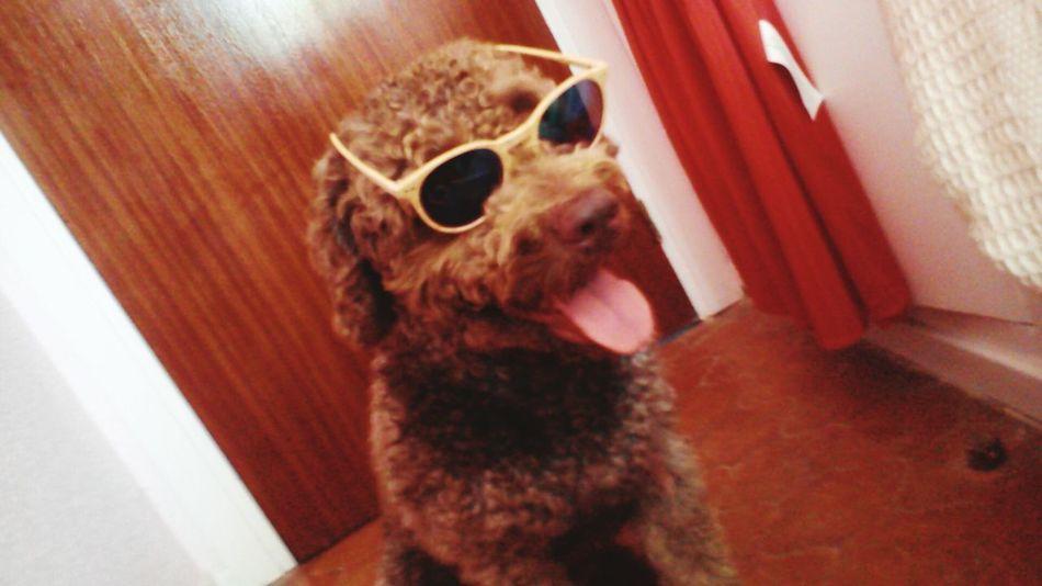 Dog Love Dogs Of EyeEm Dogmodel Dogfotograph