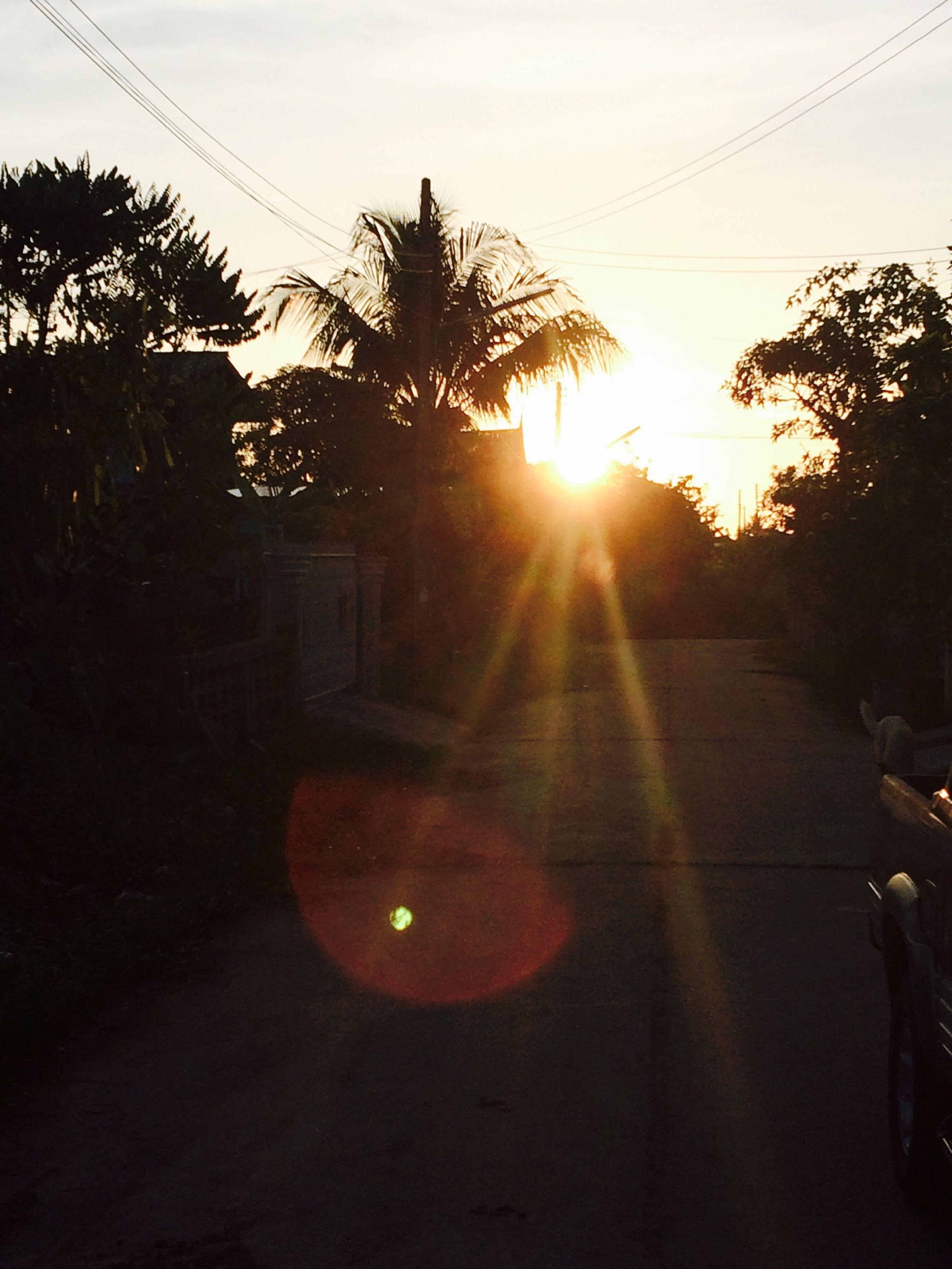 sun, sunset, lens flare, sunlight, tree, sunbeam, silhouette, transportation, sky, road, street, car, no people, clear sky, land vehicle, nature, shadow, outdoors, sunny, back lit