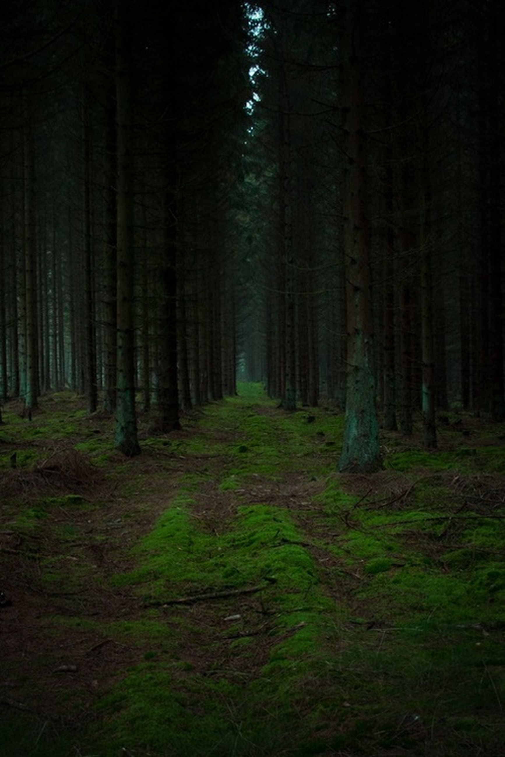 tree, forest, tree trunk, woodland, tranquility, tranquil scene, nature, growth, beauty in nature, landscape, scenics, non-urban scene, green color, the way forward, grass, woods, outdoors, no people, day, branch
