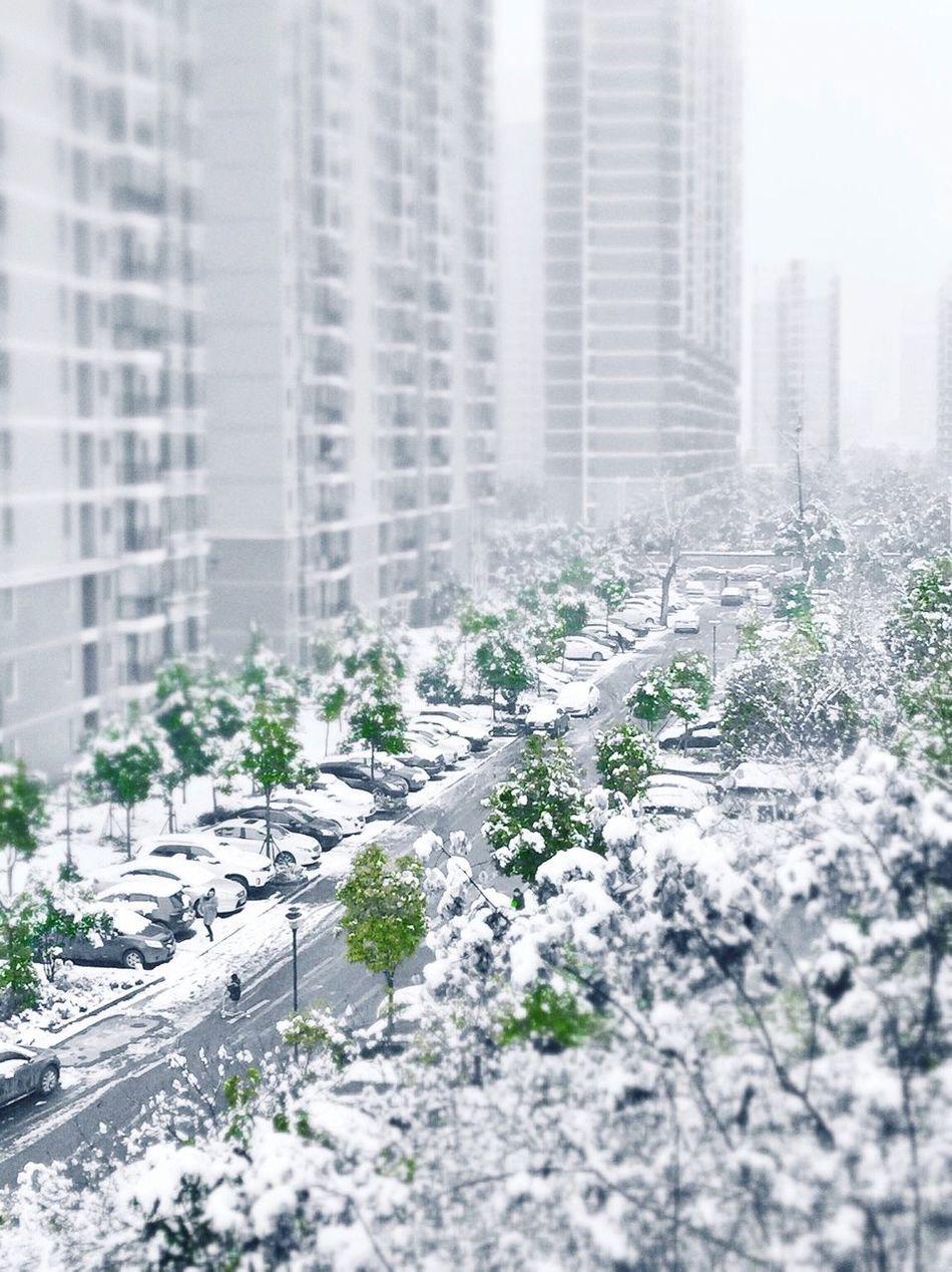 Building Green Winter Gray Estase