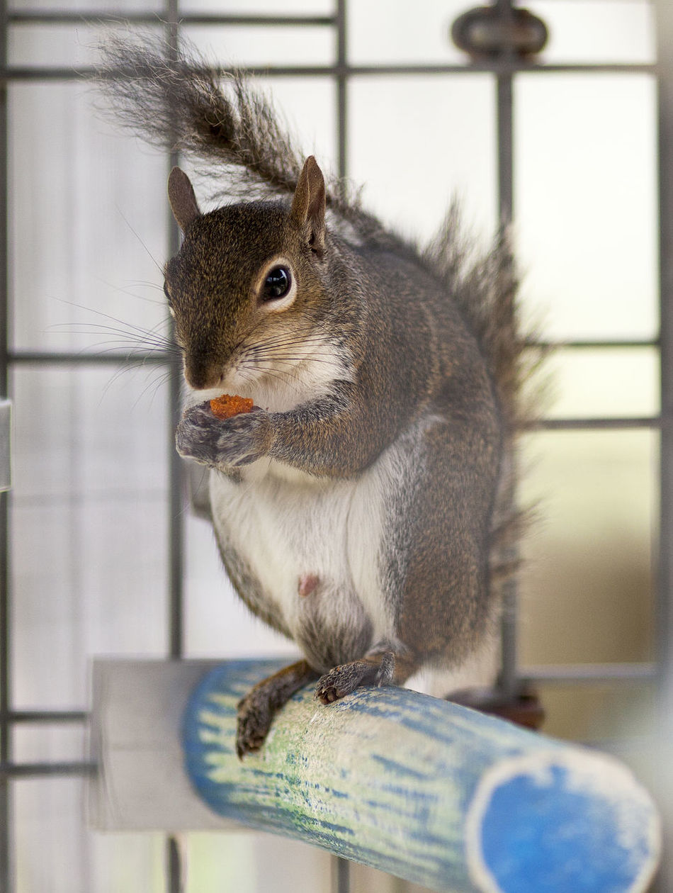 Animal Themes Animals In The Wild Close-up Day Eating Indoors  Mammal Nature No People One Animal Pets Squirrel