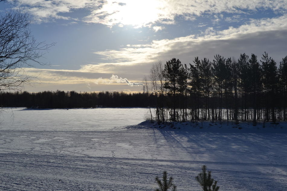 Bare Tree Beauty In Nature Cloud - Sky Cold Temperature Day Forest Ice Landscape Nature No People Outdoors Scenics Sky Snow Sun Sunset Tranquil Scene Tranquility Tree Winter