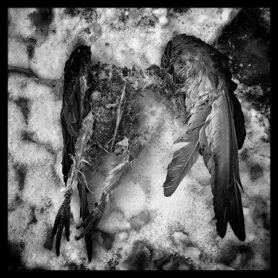 Taken away. Dead Things Dead Blackandwhite Black And White Blackandwhite Photography Bird Birds Throughmyeyez Taken Away Alone Dark In The Snow Winter When It's All Over