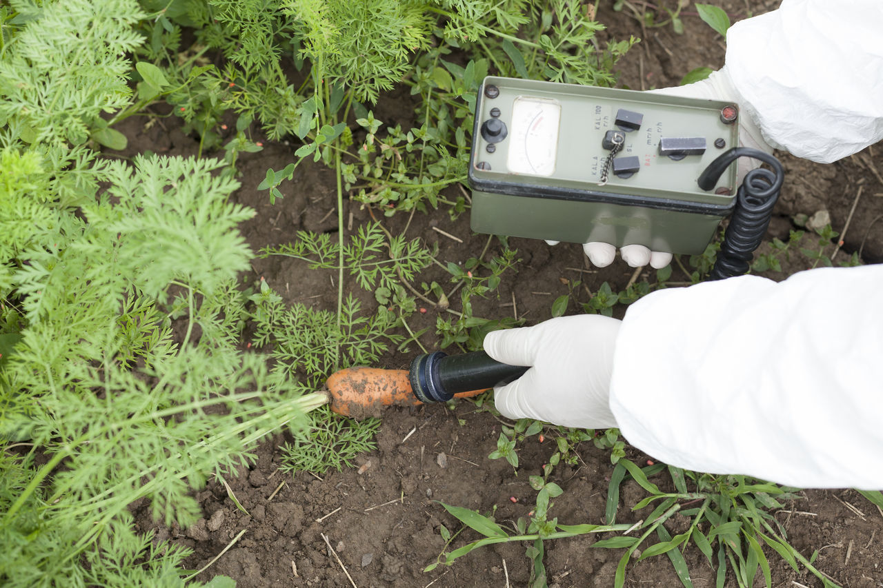 Measuring radiation level of carrot Garden Level; Agriculture Food; Healthcare Measuring Radioactive Analyzing Carrot Cultivated Detecting Equipment Geiger Counter Holding Human Hand Instrument Measurement Measuring Radioactivity Pollution Protective Glove Radiation Soil; Vegetable