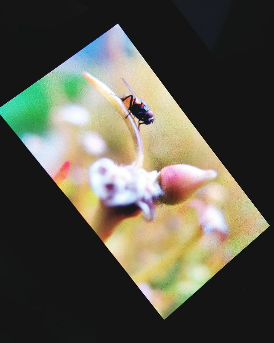 Flies shot from my camera today Outdoor Photography Flies Feel The Journey Original Experiences Hello World Fresh On Eyeem  The Week Of Eyeem My Point Of View Eyeem Photography My Capture  Fly On A Flower Insect Garden Photography EyeEm Nature Lover The Mix Up Tech Meet Nature