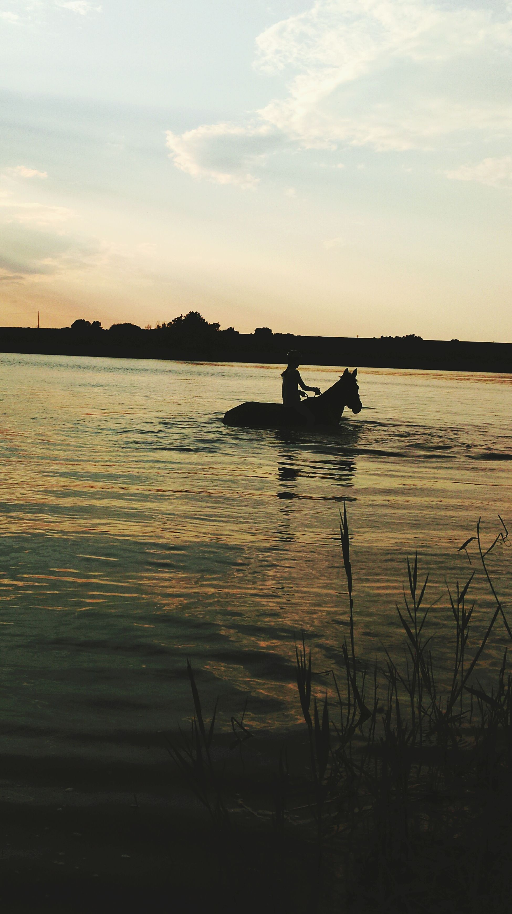 Check This Out View Enjoying Life Taking Photos My Horse Horse Riding Beautiful Nature Nature Holiday♡ Enjoying The Sunset