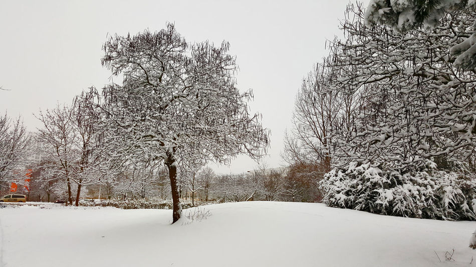 Beauty In Nature Berlin Berlin Photography Berliner Ansichten Bürgerpark Marzahn Cold Temperature Day Freshness Germany Landscape Marzahn Nature No People Outdoors Snow Snowing Tree Winter
