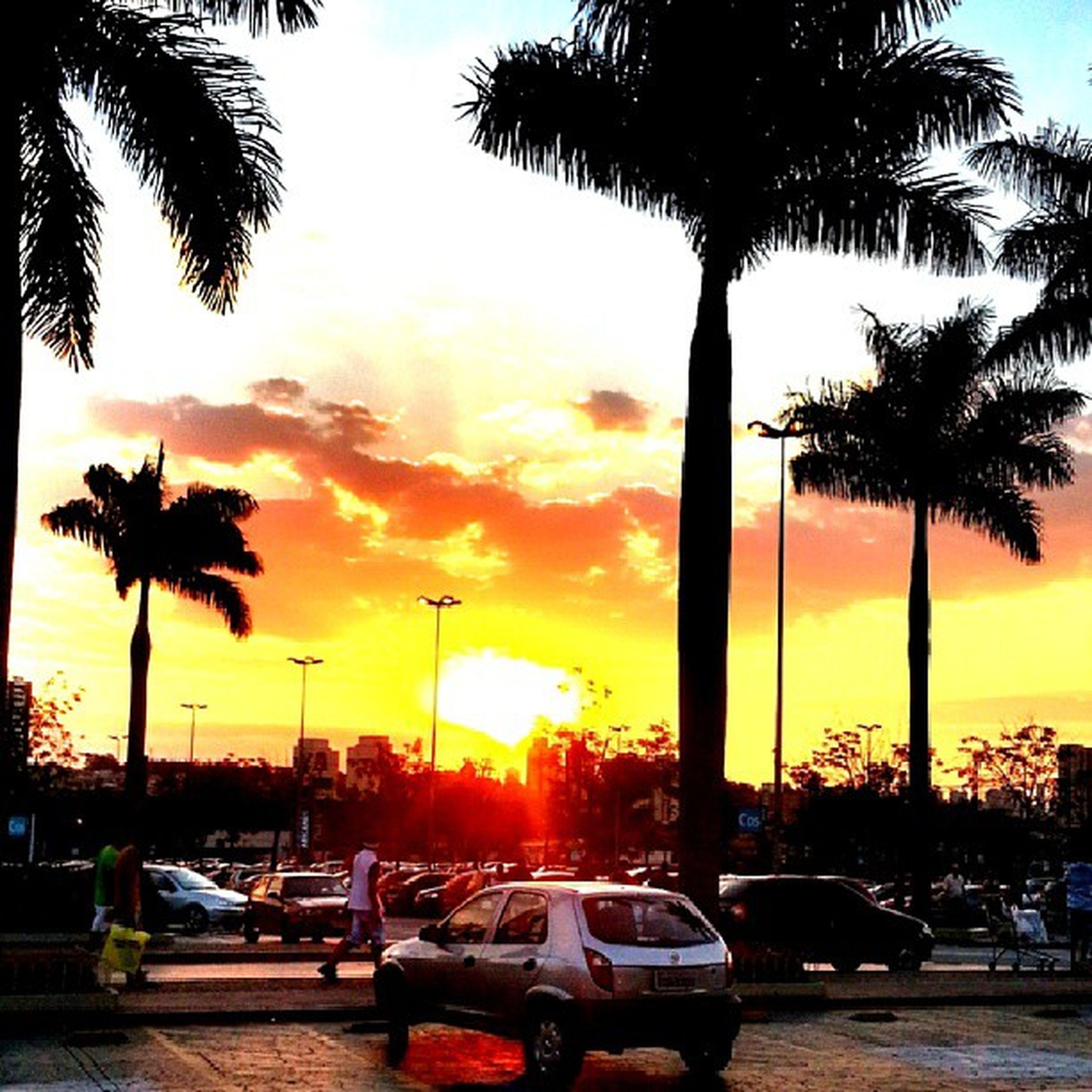 sunset, palm tree, sun, tree, transportation, mode of transport, orange color, silhouette, sea, car, sky, land vehicle, sunlight, beauty in nature, nautical vessel, beach, water, travel, scenics, tree trunk