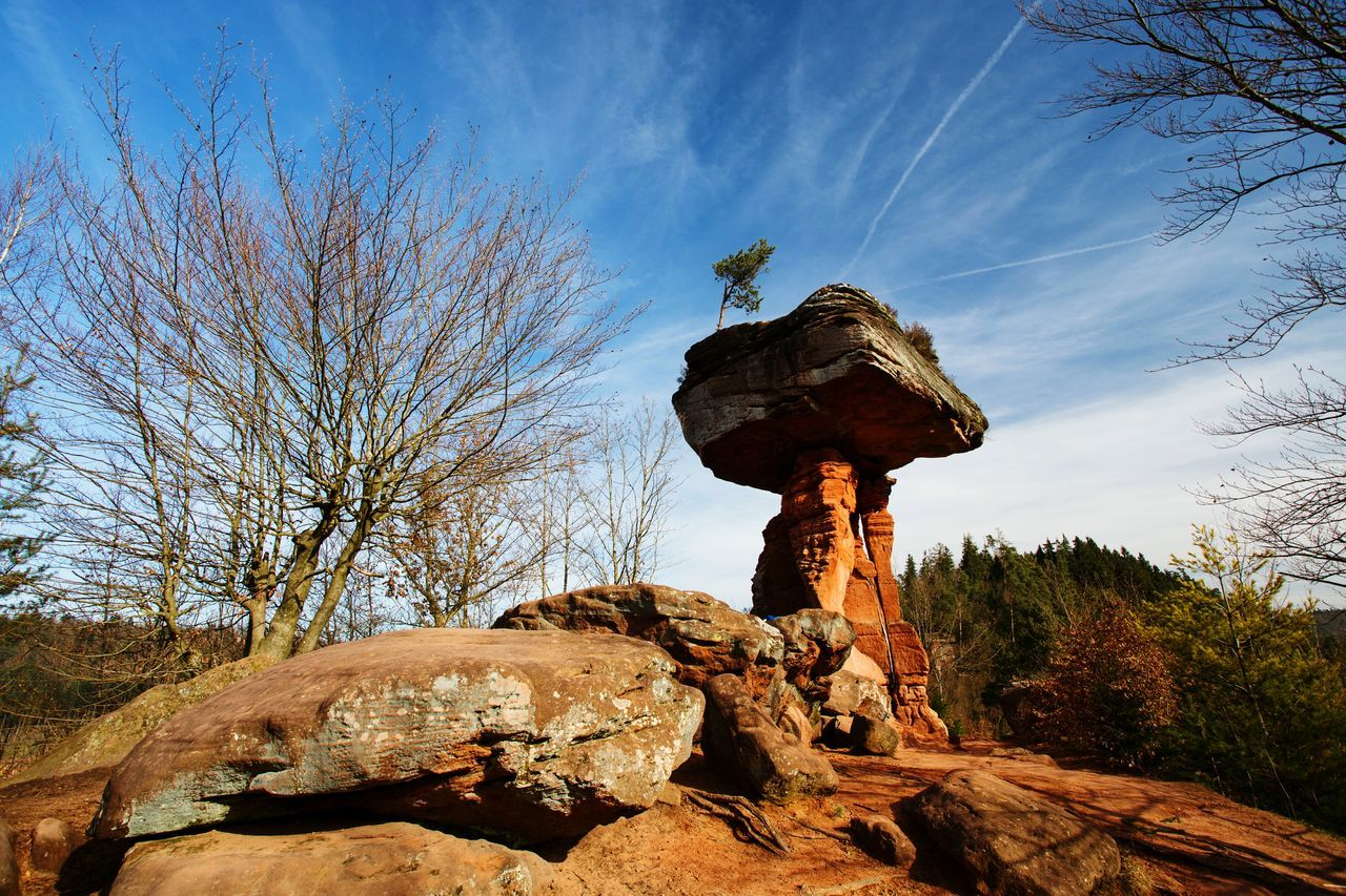 Tree Sky Outdoors No People Clear Sky Nature Close-up Scenics Beauty In Nature Day Dahner Felsenland Rock Germany🇩🇪 Nature Nature_collection