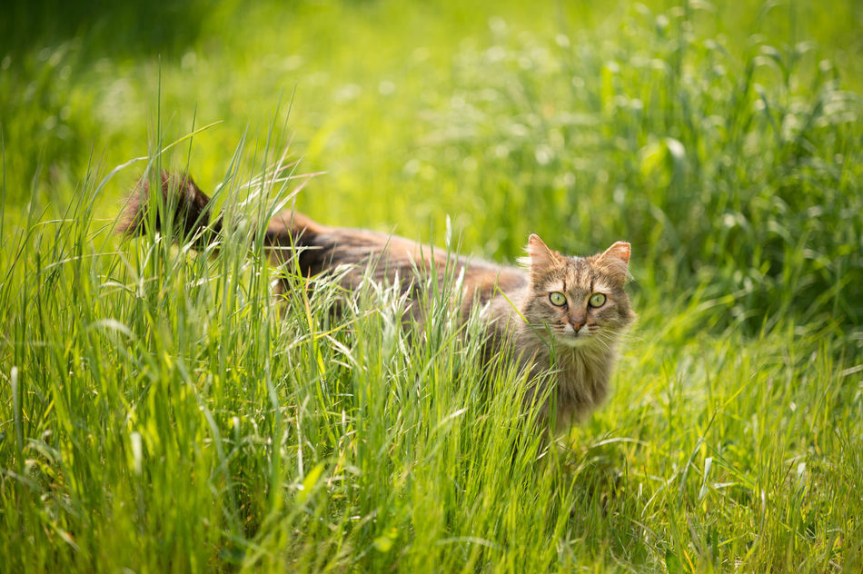 Stray Cat in a Field Animal Themes Bokeh Cat Cats Cats Of Istanbul Cat♡ Domestic Animals Feline Field Focus On Foreground Grass Grassy Green Color Growth Mammal Nature No People One Animal Outdoors Stray Animal Stray Cat
