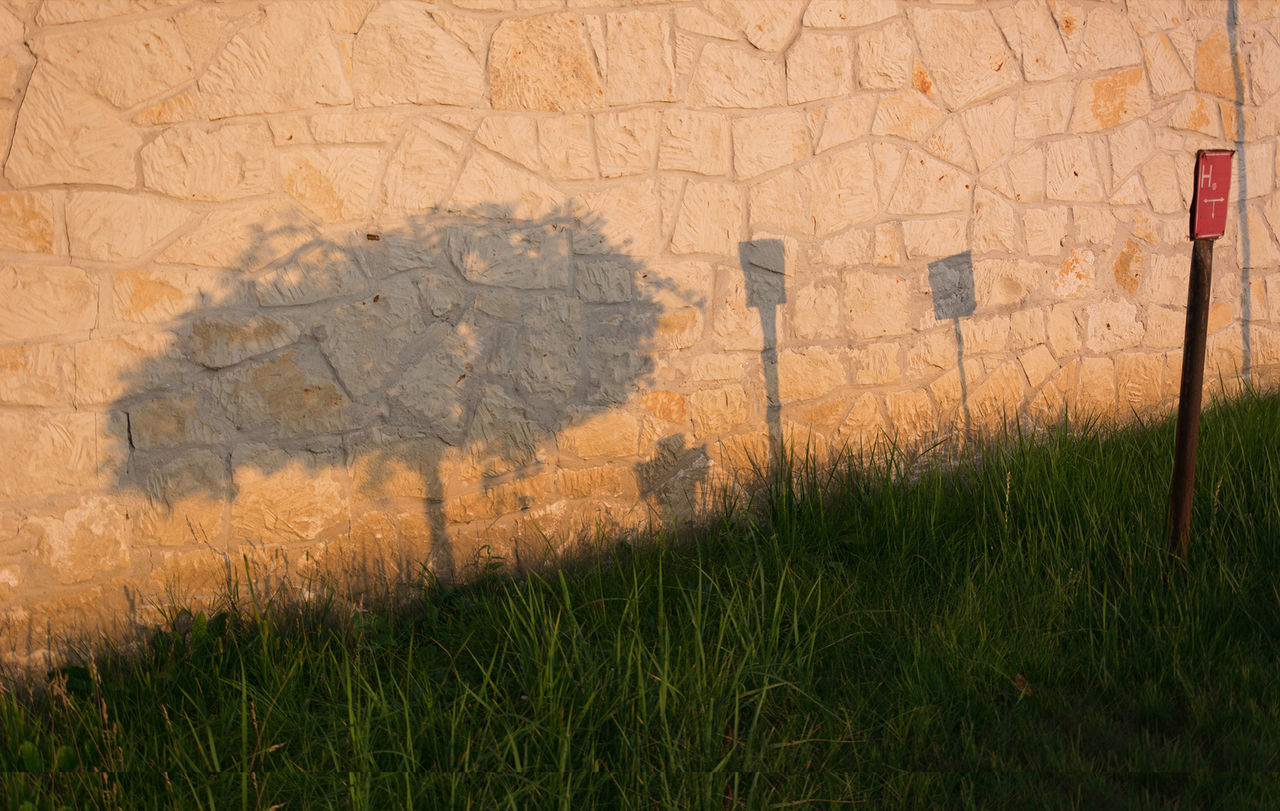 Focus On Shadow Grass Growth Outdoors Plant Shadow Sunset Symbol Wall Whichshadow?