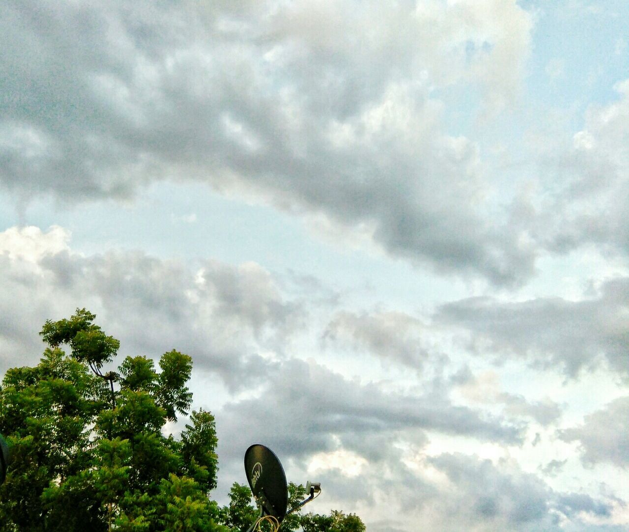 cloud - sky, sky, tree, low angle view, nature, day, no people, beauty in nature, outdoors, growth, scenics, animal themes