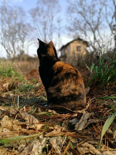 Cute Lovely Cat Cat Lovers Calico Cat One Animal Animal Animal Wildlife Animals In The Wild No People Mammal Nature Outdoors Animal Themes Grass Day
