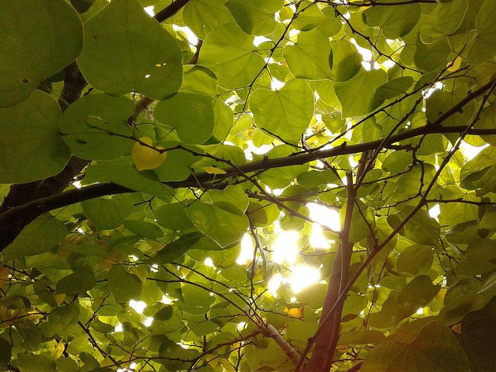 Goodmorning Sunshine Tree Sunlight Outdoors Nature Nature_collection The Week On EyeEm Beauty In Nature Beauty In My Garden The Wisdom Is In The Trees Not The Glass Windows Under The Canopy