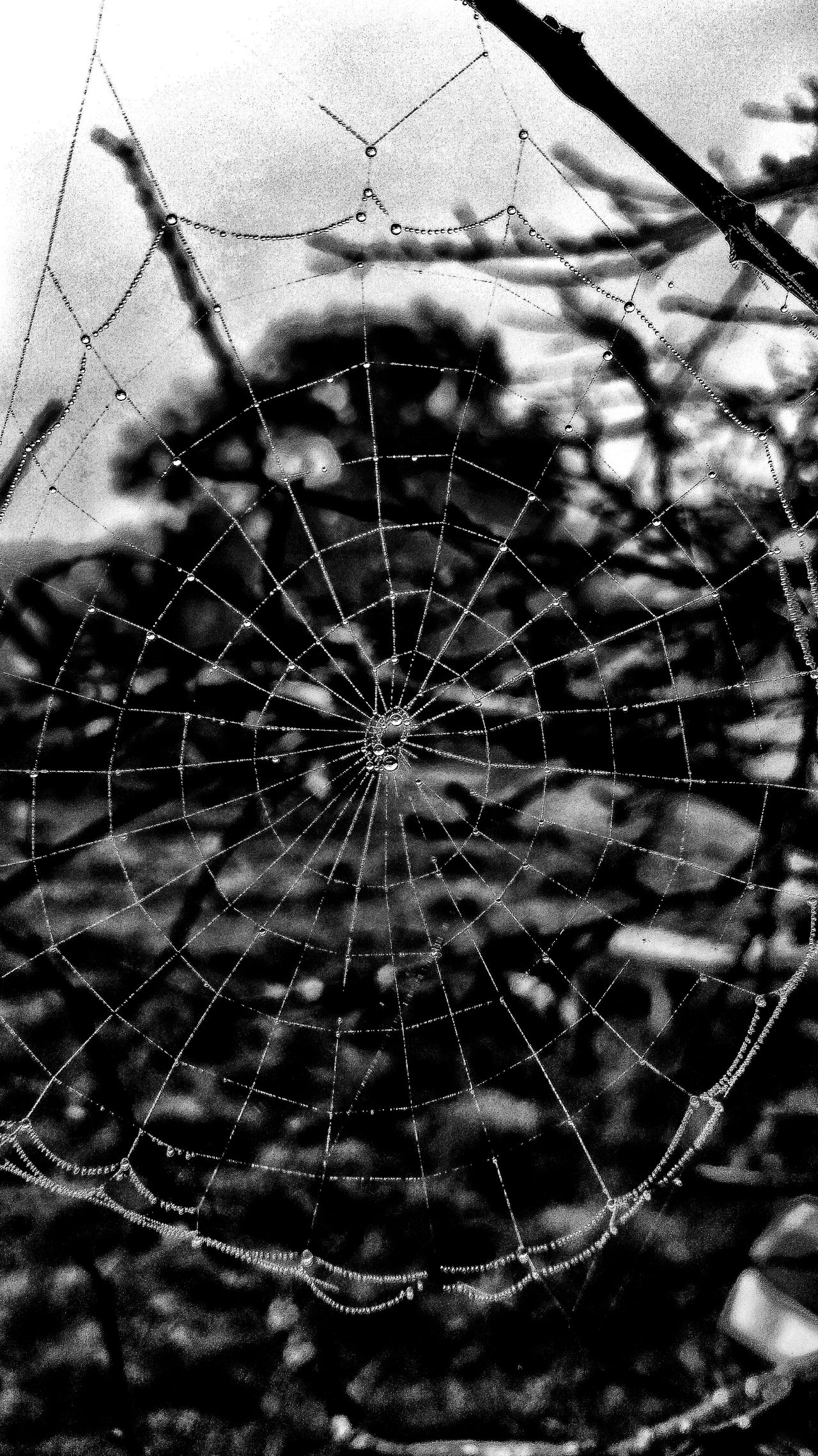 Close-up Spider Web Web Dew Dewdrops Dew Drops Dew Drops On Spider Web Rough Designs In Nature Textured  Backgrounds Shapes And Forms Still Life Natures Diversities Bare Tree Patterns In Nature