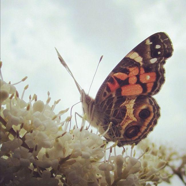 Close up! 15likes 25likes Teg Butterfly Butterflyig Photooftheday Got_talent Instacanvas Kes_favs All_shots Instamood Sspics Ig 10likes Jj  30likes 20likes Ignation Awesome_shots