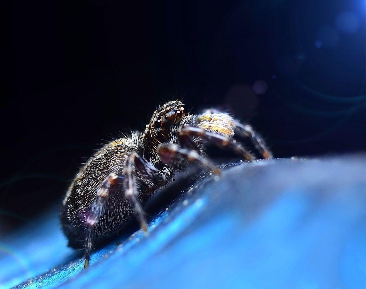 EyeEm Nature Lover Light And Shadow Nature EyeEm Best Shots Spider Macro Macro_collection Macro Photography