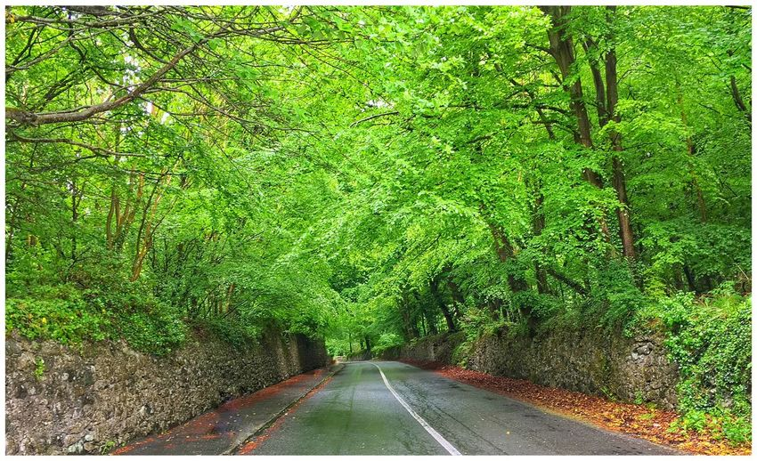 Down the Forest Road Found On The Roll Tranquil Scene Nature Beauty In Nature Winding Road Side Roads The Great Outdoors With Adobe Color Palette