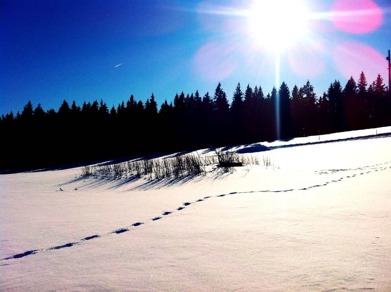 snow, winter, tree, cold temperature, sunlight, sunbeam, nature, sun, lens flare, tranquil scene, tranquility, landscape, beauty in nature, scenics, outdoors, no people, sky, day, clear sky