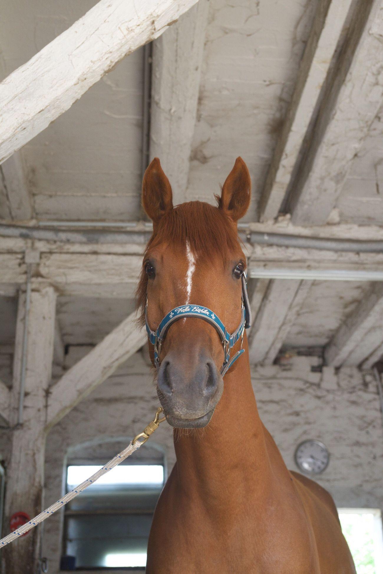 L'ami Horse Bestone