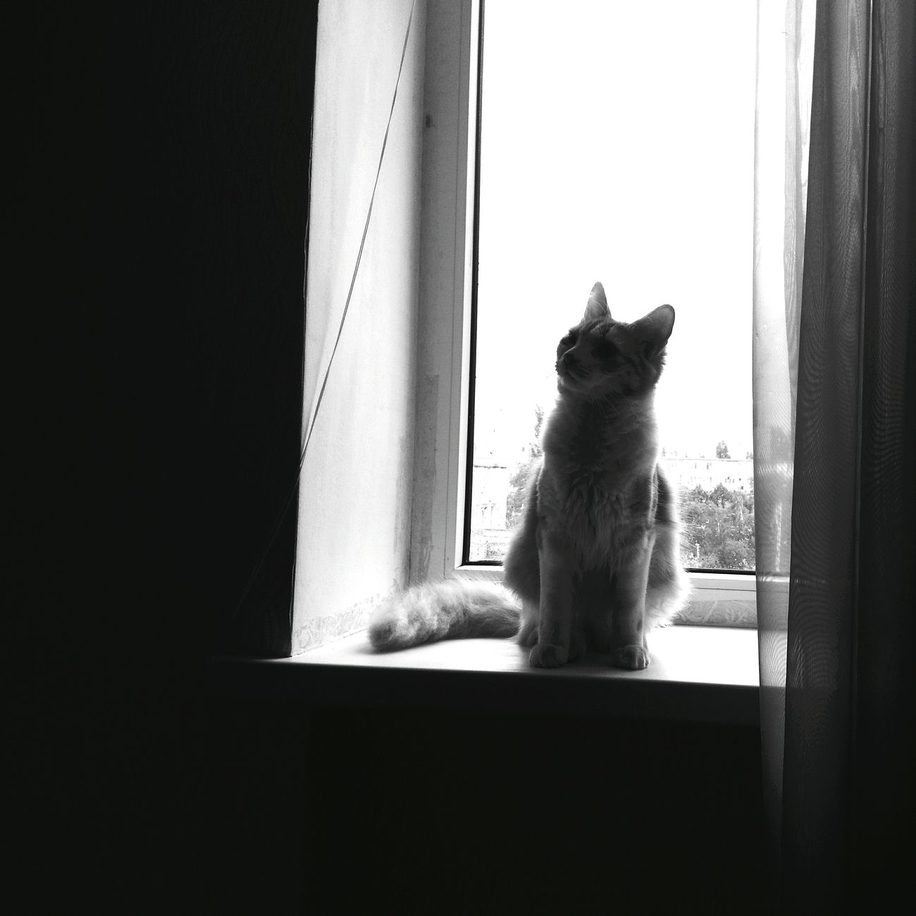 Mycat Blackandwhite B&WPhoto Window Cute Pet Listen Music Hollywoodundead And Deuce