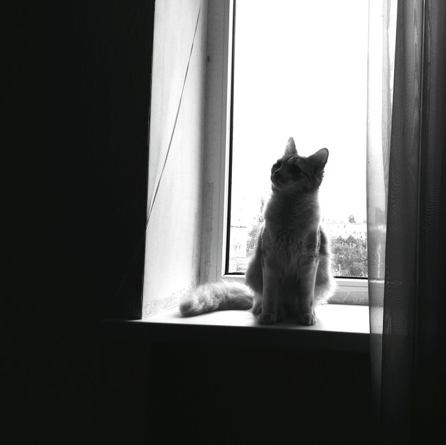 Mycat Blackandwhite B&WPhoto Window Cute Pet Listen Music Hollywoodundead And Deuce