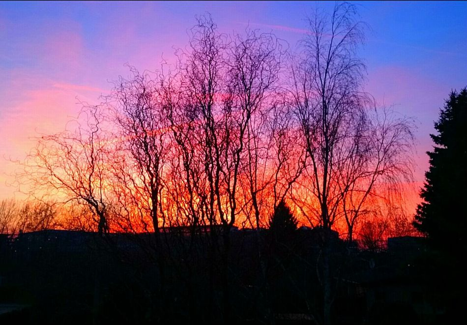 Sunset Sunset_collection Colors Colorful Spring Evening Sky Silhouette