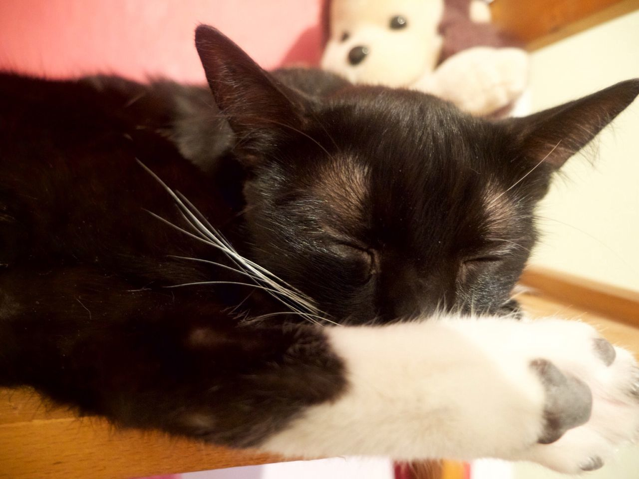 domestic cat, pets, domestic animals, mammal, animal themes, one animal, feline, cat, indoors, relaxation, no people, close-up, whisker, lying down, day