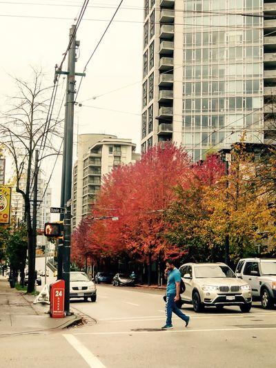 Autumn in Vancouver British Columbia 467914 Autumn Colors Autumn Vancouver BC